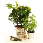 Make Mine a Mojito Gift Set, £32, (plus delivery) www.plants4presents.co.uk